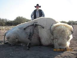Beautiful Bison Killed By Ugly Hunter