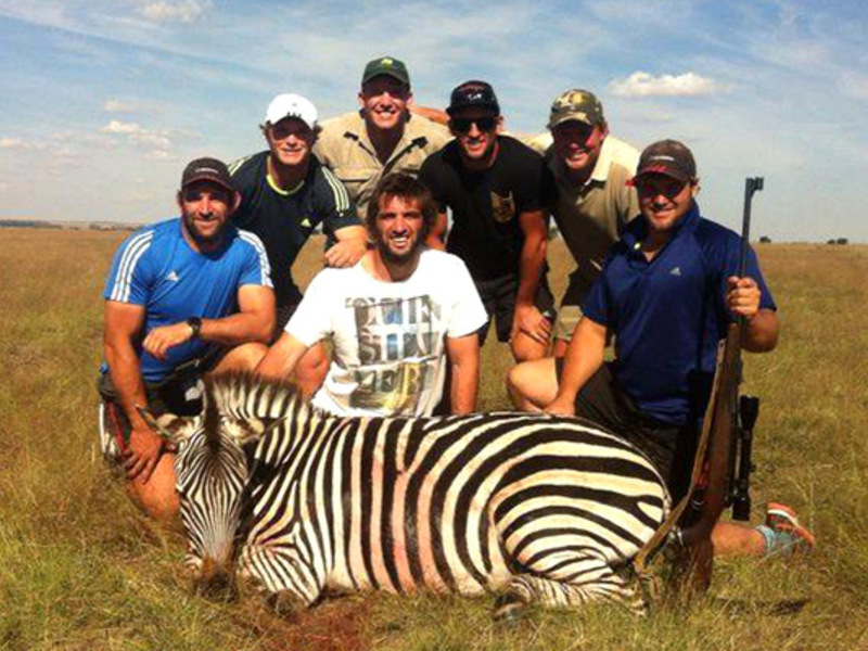 Zebra Killed In Canned Hunt
