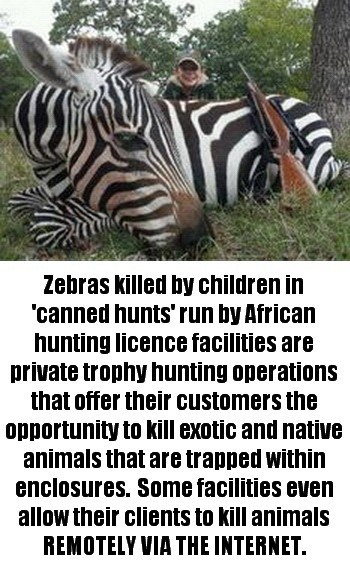 No Matter How Gentle The Zebra Someone Wants To Murder It